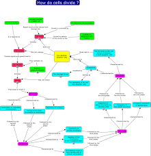 Cell Reproduction Concept Map Answers Cell Division Concept Map Answers Polski Trend