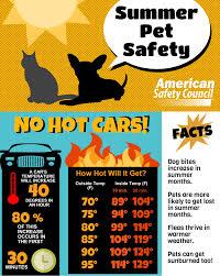 pet safety series heat summer pet safety