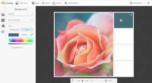 create a color palette picmonkey