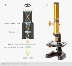 Parts Of A Compound Light Microscope How Fluorescence Microscopy Works Thermo Fisher Scientific
