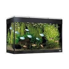Fluval 125 Cabinet Fluval Roma 125 Aquarium White Decor Strip Pet Experts Based