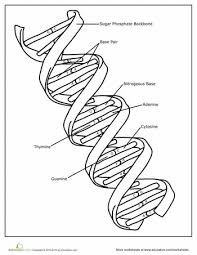 263 best bio dna u0026 rna images on pinterest teaching biology