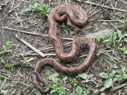 what does wood symbolize spirit animal snake symbolism wild gratitude
