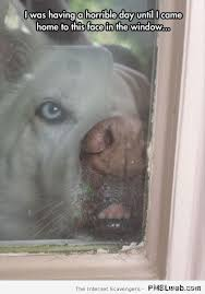 Funny Dog Face Meme - 4 dog face in the window meme pmslweb