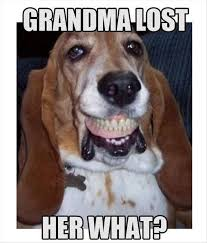 Lost Dog Meme - 12 best basset hound memes of all time