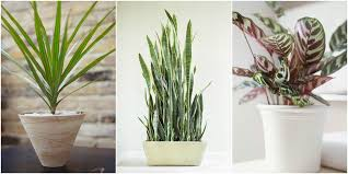 Common Tropical House Plants - low light houseplants plants that don u0027t require much light