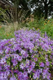 plants native to illinois why you should sow wildflower seeds during winter hgtv