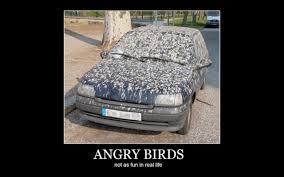 Utah Memes - utah car cents 10 best car memes