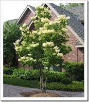 Backyard Shade Trees Garden Design Garden Design With Top Small Trees For Landscaping