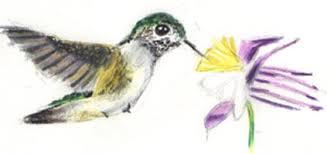 hummingbirds quick sketch wetcanvas