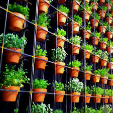 107 best living wall images on pinterest gardening balcony and