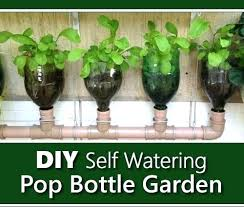 sealed bottle garden water bottle gardening how to make a mini garden on a balcony using