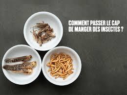 comment am ager cuisine comment manger des insectes 8 idées pour vous y mettre