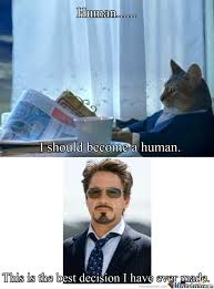 Success Cat Meme - success cat robert downey jr by stalkergirlfriend meme center