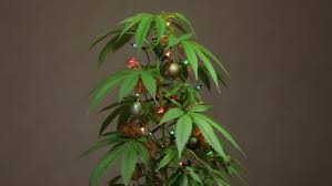 cannabis christmas tree decorated plant with lights