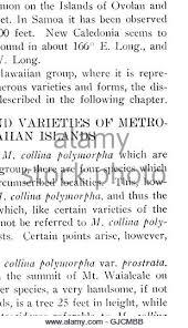 botanical sts botanical bulletin 1911 stock photos botanical bulletin 1911