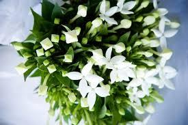 november seasonal flowers flowers according to seasonal availability