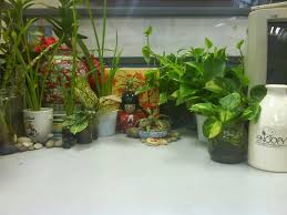 garden chronicles indoor plants office cubicle