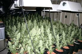 Best 25 Marijuana Grow Lights by Cheap Led Grow Lights Kits And Grow Systems