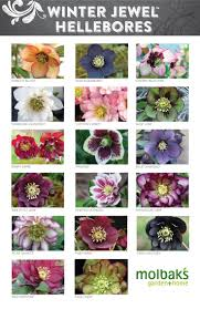 65 best the winter garden images on pinterest winter garden
