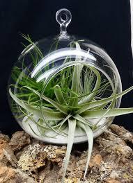 6pcs set hanging air plant holder 10cm globe terrariums 4 5 inch
