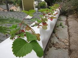 Diy Self Watering Herb Garden Self Watering Containers Root Simple