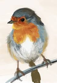 drawn bird robin pencil and in color drawn bird robin