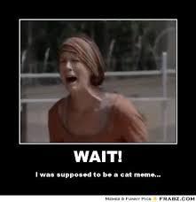 Walking Dead Meme Generator - walking meme