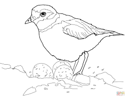 snake attacks brown thrasher nest coloring page free printable