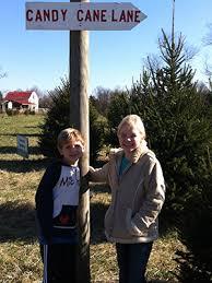 christmas tree farms close to the annapolis area