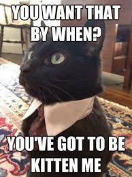 Meme Business Cat - businesscat hashtag on twitter