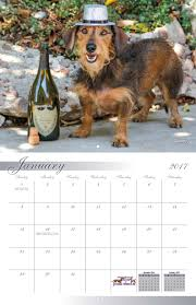 boxer dog 2016 calendar dachshund paws and pals rescue 2017 calendar yearbox calendars
