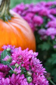 Mackenzie Childs Pumpkins Diy by Marvinsdaughters Diy Happy Fall Y U0027all Pumpkin