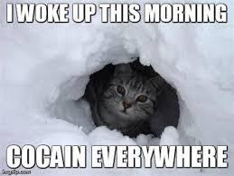 Bear Cocaine Meme - cocaine cat meme 28 images cocaine bear meme memes cocaine