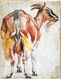 goat u0027 pastel chalk sketch by jacob jordaens 1593 u2013 1678 sheep