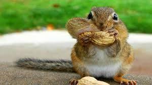 Squirrel Meme - squirrel meme funny squirrel pictures
