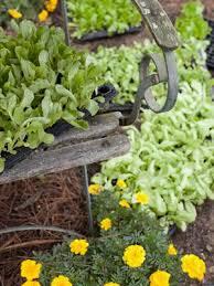 29 best garden watering images on pinterest vegetables garden
