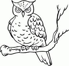 257 best owls u0026 other birds images on pinterest owls owl