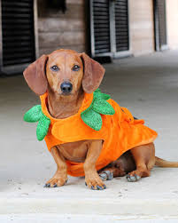 Halloween Costumes Dogs Matching Owner Dog Costumes Pet Rifyingly Cute Halloween