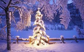 outdoor christmas tree outdoor christmas tree hd wallpaper