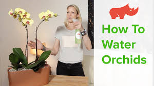 Self Watering Planters How To Water Orchids In Self Watering Planters Youtube
