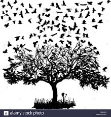 crows in a tree stock vector illustration vector image