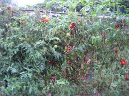 truth in tomatoes ruffled feathers and spilled milk
