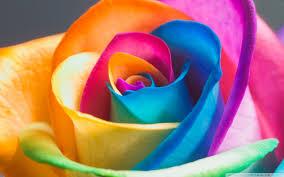 Beautiful Wallpapers Beautiful Rainbow Roses Wallpaper Widescreen 7020084