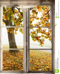 maple tree viewed through window stock photo image of tree nature