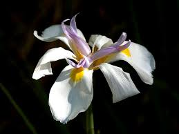 Flower Orchid Free Picture Nice Orchid Flowers