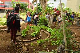 uh hilo students practice sustainable agriculture in gardens