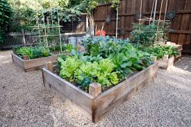 if you want to grow and eat veggies this fall here u0027s how to get