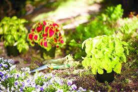 planning your new shade garden garden club