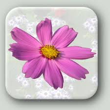 Flowers Of The Month List - flowers of india android apps on google play